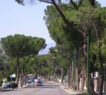Mastella vuole abbattere 352 alberi, ma le relazioni tecniche dicono ben altro.
