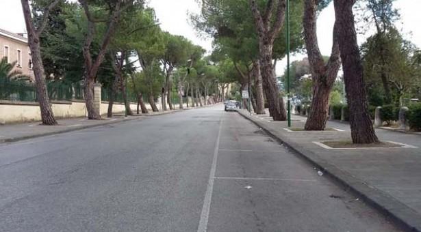 Taglio dei pini del viale Atlantici, non esiste la perizia della Regione Campania